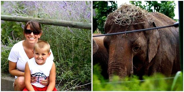 elephant hay