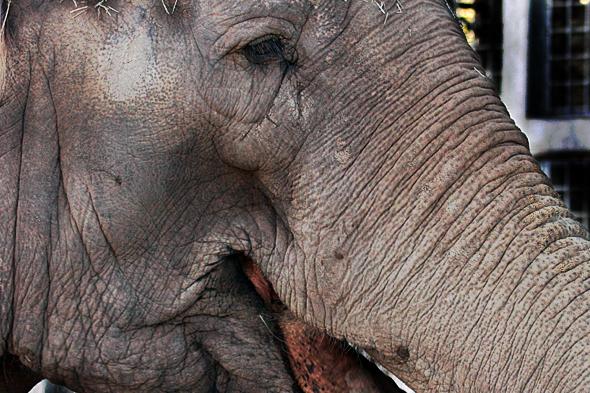 080709_elephantTrunk