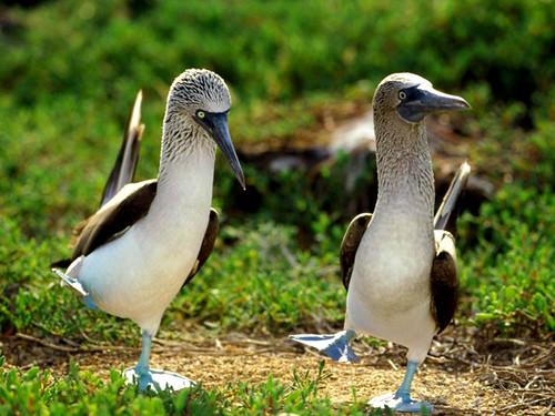 3811267374 0c574c66ea Beautiful Birds   The Splash of Colors!!!