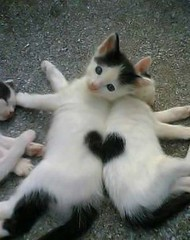 good together (wolvesatthedoor) Tags: fur babies heart sweet kittens cuddle laureltomlin