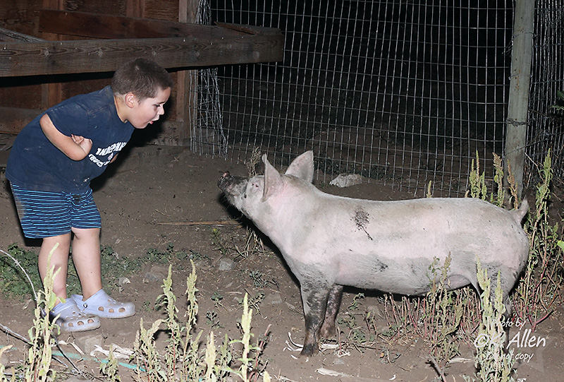Pig Riding (by KansasA)