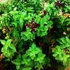 خير نبت (magd1) Tags: ، شجرة نبات زهور أوراق زرع أشجار جذور تربه رحان