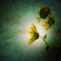 shining (moosebite) Tags: flowers light plants flower green texture nature leaves leaf colorado colorful artistic background grunge textures filter backgrounds layers filters pedal d80 moosebite jrgoodwin