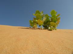 Vita (darko82) Tags: blue verde green colors sand desert senegal deserto sabbia louga regionedilouga