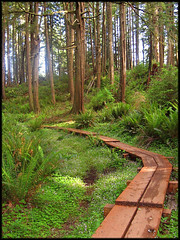 OREGON COAST TRAIL (Cliff Zener) Tags: thesuperbmasterpiece