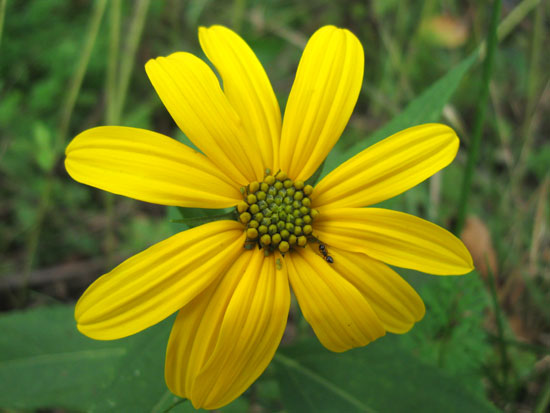 Yellow Flower (Click to enlarge)