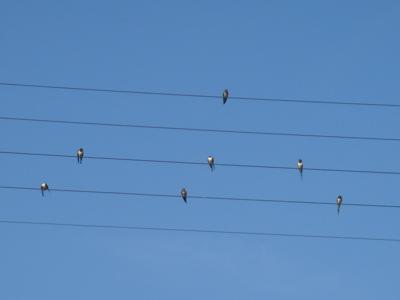 birdmusic1