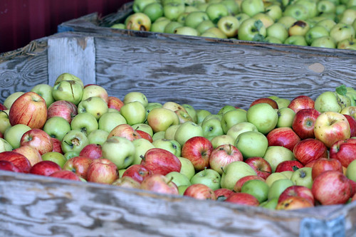 apples in bins