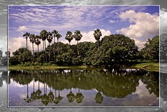 Sunlit Afternoon (sir_watkyn) Tags: trees sky cloud india reflection nature water canon landscape eos 350d interestingness pond scenery formation dslr hue soe abigfave colorphotoaward impressedbeauty flickrdiamond ysplix theunforgettablepictures thesuperbmasterpiece chakdighi sirwatkyn graphicmaster superstarthebest