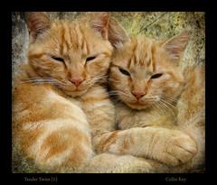 Tender Twins (1)