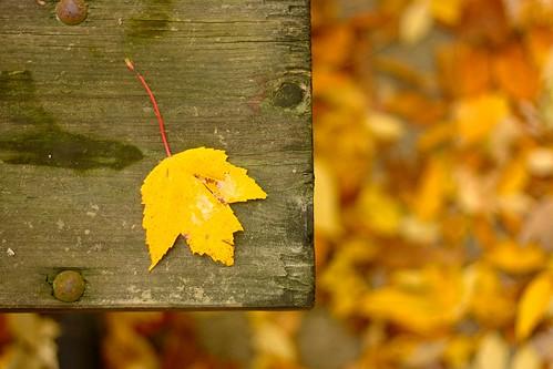 Photowalk 43 - Lone Leaf + Fall Comrades