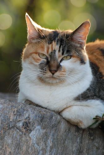 大阪城公園の猫