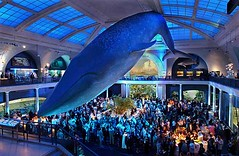 Event in The Hall of Ocean Life at The American Museum of Natural History