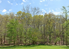Wall of Trees, April 24, 2011-s (clw_and_dog) Tags: panorama art landscape photography photo fineart images panoramic photographic photographs fineartphotography panoramics panograph panogram panoramiclandscape panoscape marylandphotography panogaph panoramiclandscapephotos