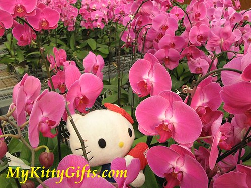 Hello Kitty's View of Red Orchids in Hong Kong Orchid Trip