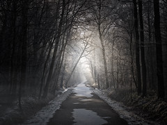 Follow the light, don't fear... (Dirk Delbaere) Tags: road light mist misty dark woods darkness path fear olympus spooky scared angst olympuse500 aplusphoto treesnight dirkdelbaere