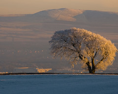 More Frosty Trees (MarkyD31) Tags: trees winter friends panorama cold tree topf25 landscape scotland landscapes pentlands clearskies sobeautiful otw topshots karmapotd scotlandscountryside thesuperbmasterpiece panoramafotogrfico thebestofmimamorsgroups