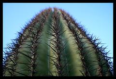 Saguaro Cactus (Steve Maciejewski) Tags: arizona cactus steve az steven needles spines spikes saguarocactus maciejewski