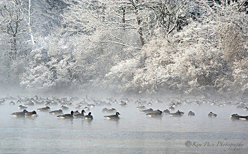 Belmont Lake Ducks- January Greeblepix!