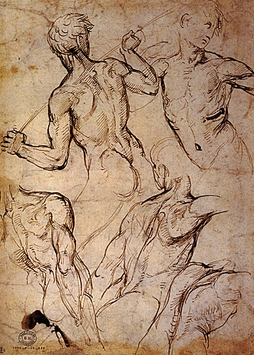 1506  Raphael    Five Studies of nude male torsos  Pen and Brown ink  26,9x19,5 cm  Londres, British Museum