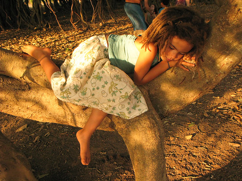 YaYa in the crook of a tree