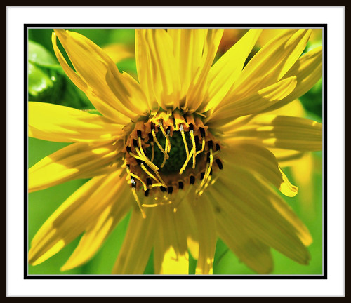 Different Take On A Sunflower