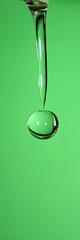 Grüner Kirsch Wassertropfen - Green cherry waterdrop (Jörgenshaus) Tags: macro green cherry grün waterdrops highspeed wassertropfen kirsche pfogold