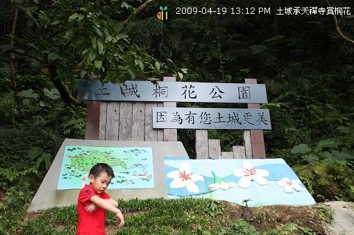 09.04.19 一探土城承天寺桐花花況 (4)