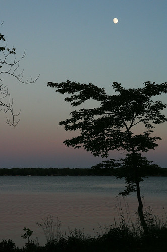 Twilight Gradient, Silhouetted Tree, and Moon