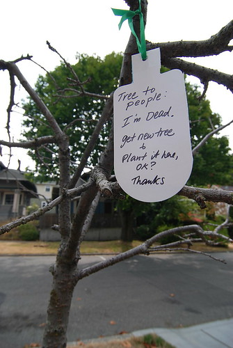 Tree to people: I'm Dead. get new tree & plant it here, OK? Thanks