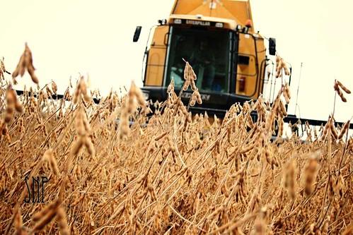 . it's almost harvest .