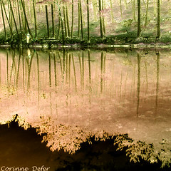 """ Reflections on the lake "" - ""Reflets sur le lac"" - 1 (Corinne DEFER - DoubleCo) Tags: naturaleza france colour reflection nature reflections landscapes lac reflet francia paesaggi reflets 2009 paysages couleur reflejos paisagens landschaften  colorisation alpesmaritimes    stauban platinumheartawards carrfranais corinnedefer updatecollection"