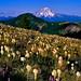 Coffin Mountain in full bloom