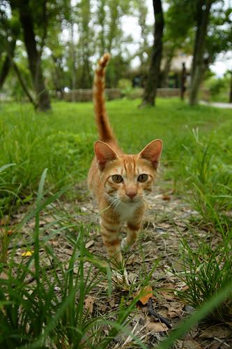 貓咪。很特別,聽到快門聲音覺得好奇,越走越近