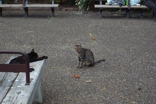 Today's Cat@20090922