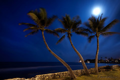 3 night trees ( KristoforG) Tags: blue moon tree canon hawaii three long exposure coconut side palm east full lunar gellert kristofor tripplets windwars