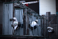 Workers Build Scaffolding (torode) Tags: japan tokyo workers scaffolding apartment safety  nerima wimax hikarigaoka     bentorode benjamintorode