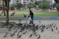 Una mujer colombiana y sus palomas