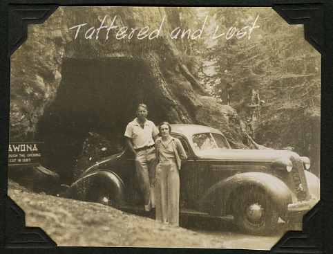 Mr. Roberts_Wawona tree_tatteredandlost
