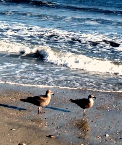 Birds on the Beach - Cape May, NJ