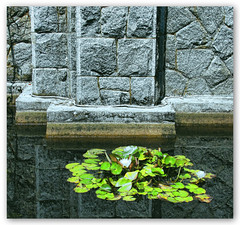 Water Lily (ZedZap Photos) Tags: green pond waterlily stones minimal zen stonewall contemplative miksang hatleycastle royalroads colwood greenlily zedzap