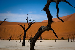 Namibian dead trees surrounded by dunes