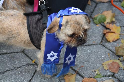 Jew Dog