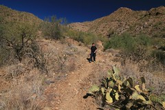IMG_9541 (simon_travelboy) Tags: arizona tucson saguaronationalpark