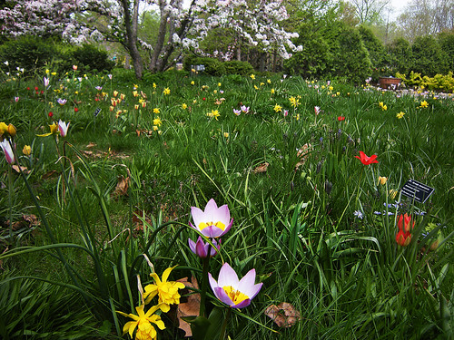 Meadow Garden at Olbrich Botanical Gardens