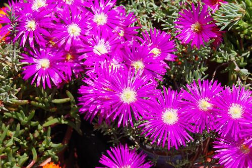 flores de messem