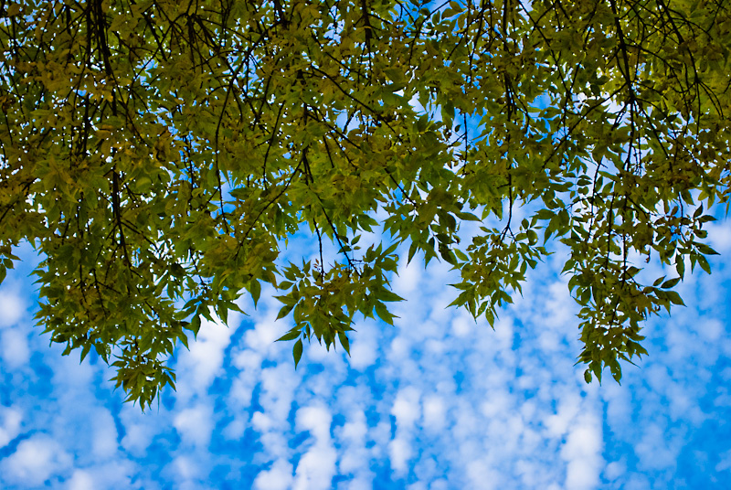 sky and branches