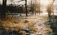 The yellow sun i shining in the afternoon. (Steffe K) Tags: winter sun snow film 50mm canonae1 caonon