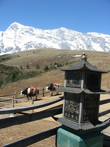 Vuilbak, yak en Himalaya
