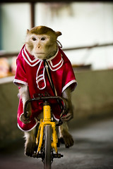 Lance Furstrong (bongopix) Tags: carnival animal bike bicycle monkey circus humor humour vietnam yellowandred monkeyisland nhatrang funnyanimal animalshow canon70200f28l animaltrick clothedmonkey